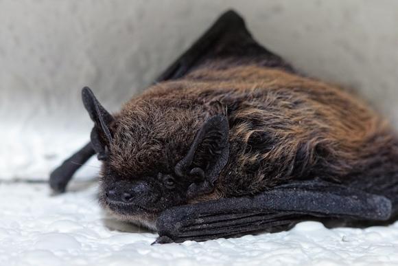 Un murciélago en mi casa