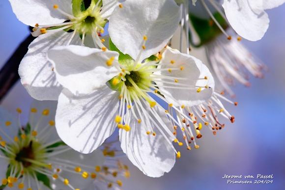 Floración | Campo de San Juan