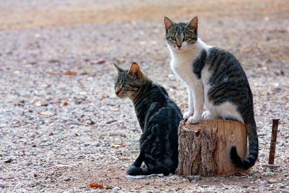 Gatos callejeros en la Fuensanta