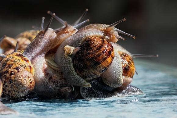 Fotografía de serranos, caracoles