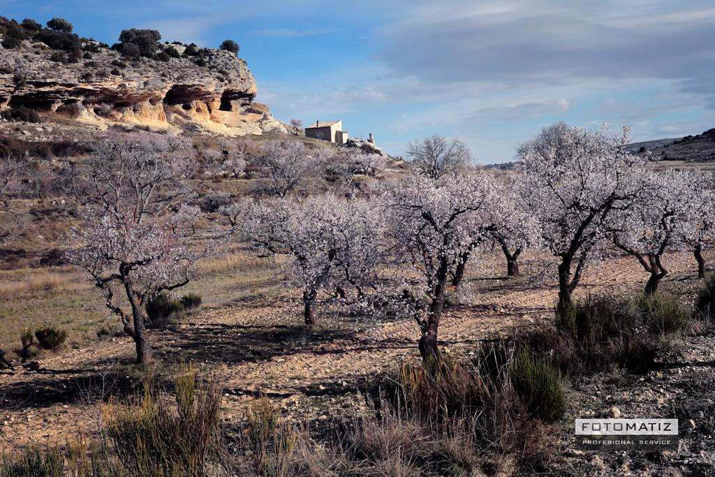 Almendros en flor en Bajil