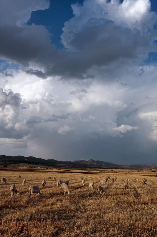 Fotografía Tarde nublada