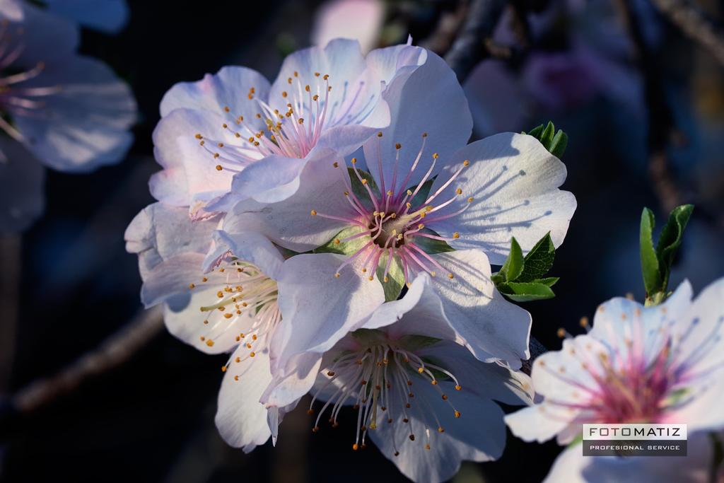 Floracíon en Murcia