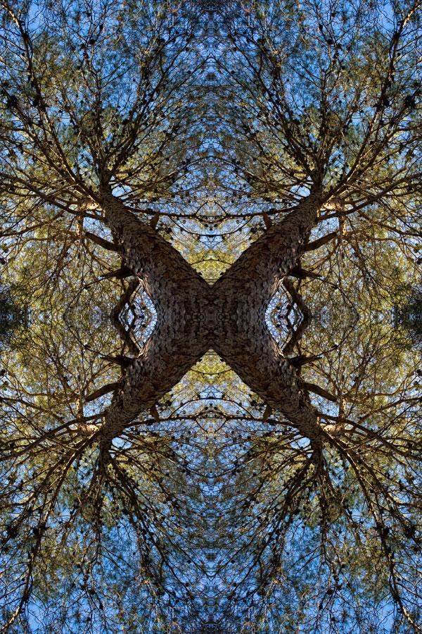 La Naturaleza Inventada [F3]
