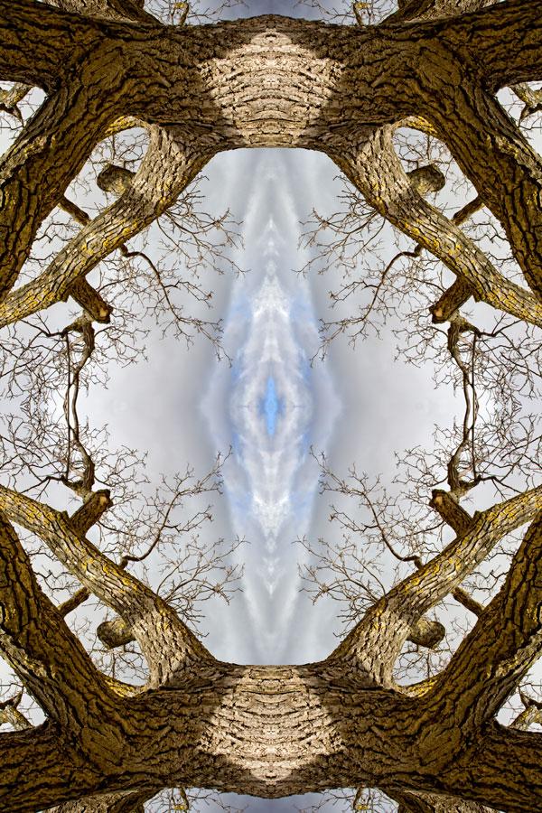 Expo Naturaleza Inventado - Invented Nature [F6]