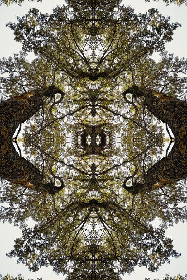 Expo Naturaleza Inventado - Invented Nature [F9]