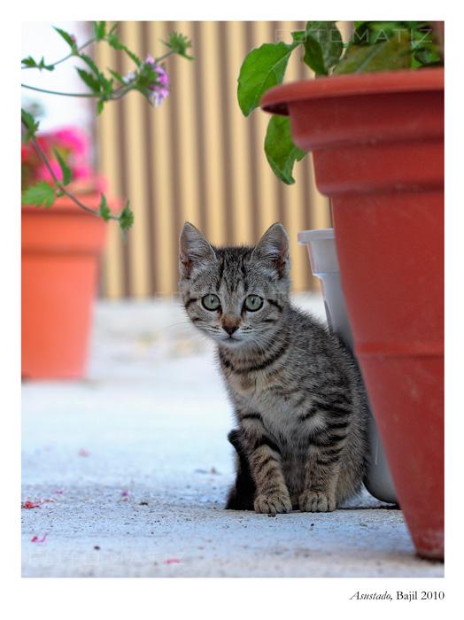 Gatito asustado en Bajil